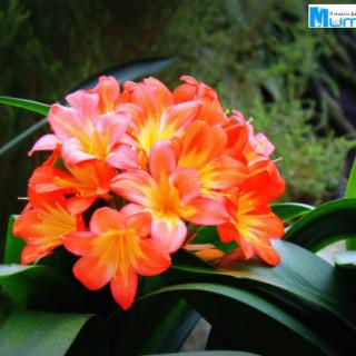 Orchid Extravangza