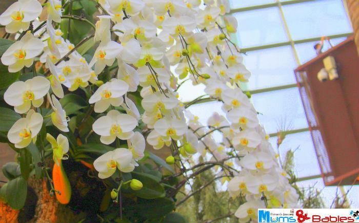 Gardenbythebay35a